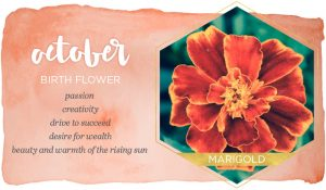 October Birth Flower Meaning